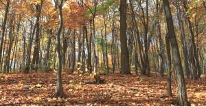 С контактни лещи през есента, какво трябва да знаем.